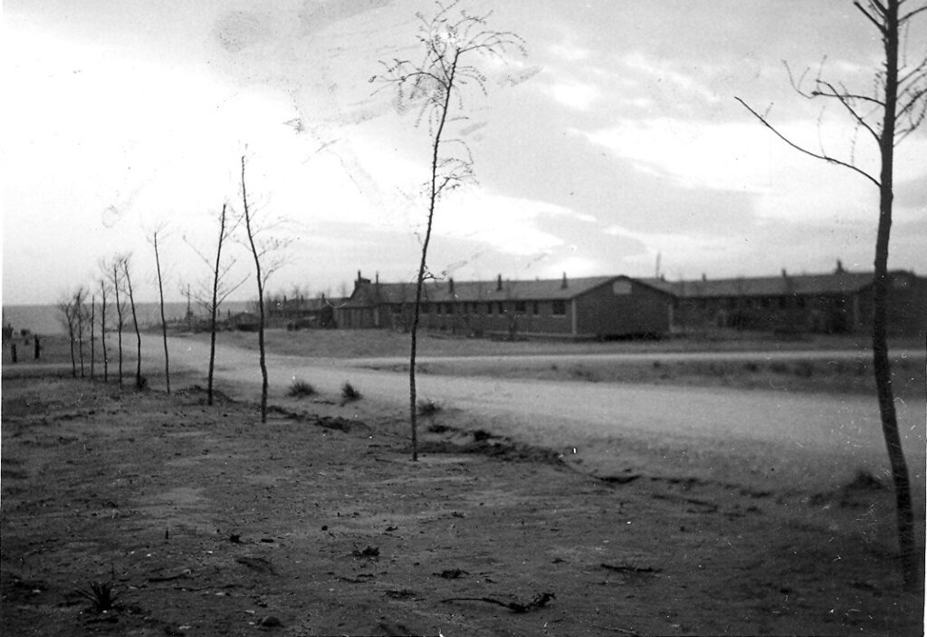 Photo courtesy Homma Family Collection.  Internees transplanted trees from the Arkansas River Valley to Amache.  Several of these trees are still present today.